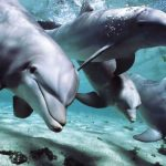 North Coast – Dolphins Forever
