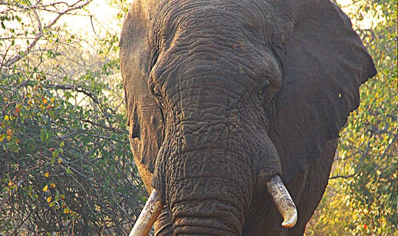 Elephant Coast – Wild Biodiversity