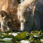 Tenikwa – Wildlife Rehabilitation & Awareness Centre