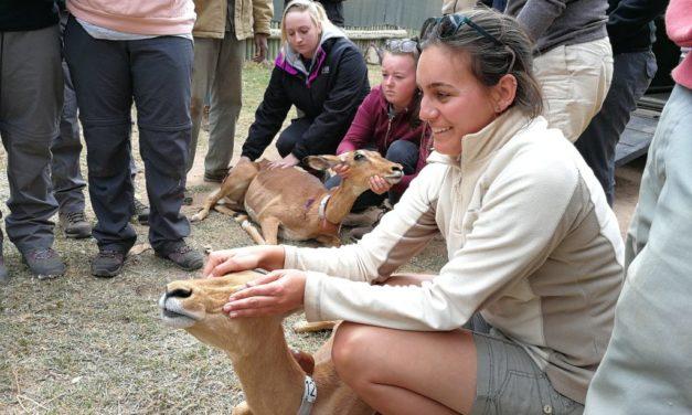 A New approach to Anti-Rhino Poaching