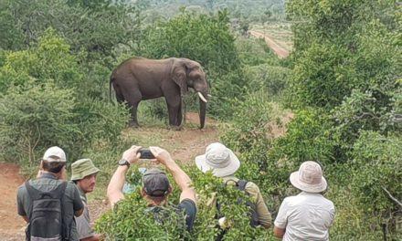 Wildside Walking Safari