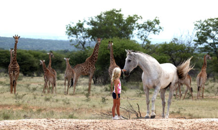 Horseback Safaris – The Ultimate Family Holiday