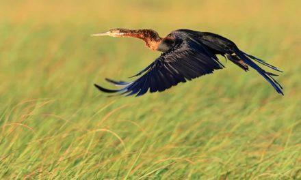 Incoming: Southern African Birding Safari Season