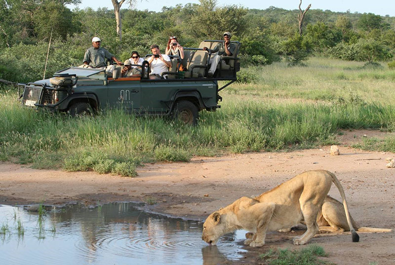 What to Expect on a Family Safari