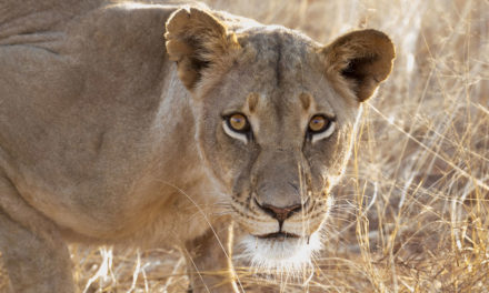 Top 3 Wildlife Destinations in the Southern African Safari Circuit