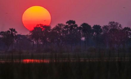 5 Reasons to Take a Southern African Safari
