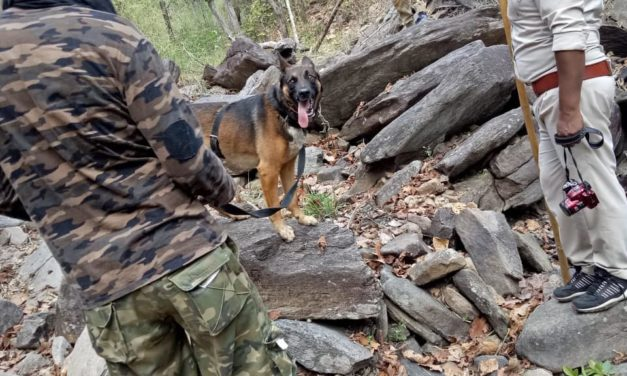 DOGS SAVING TIGERS AND CATCHING POACHERS