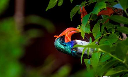 Birding Safari 101