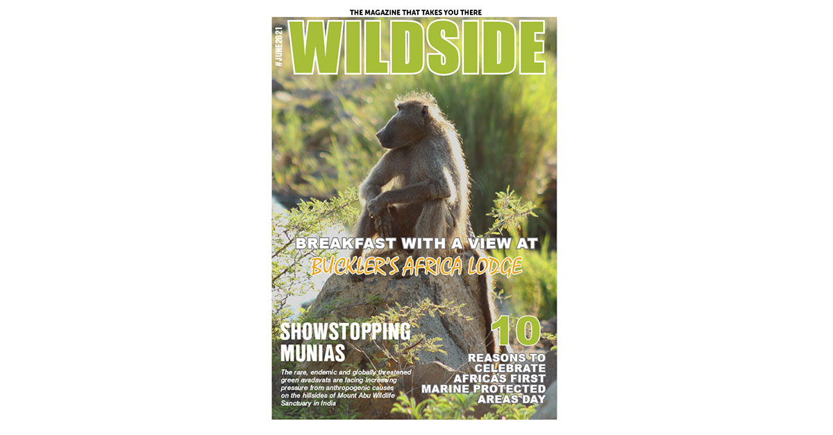 The June 2021 edition of Wildside Magazine is now ready for your reading pleasure!