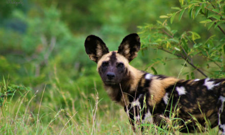 Experience a Wildlife Conservation Safari in Zululand