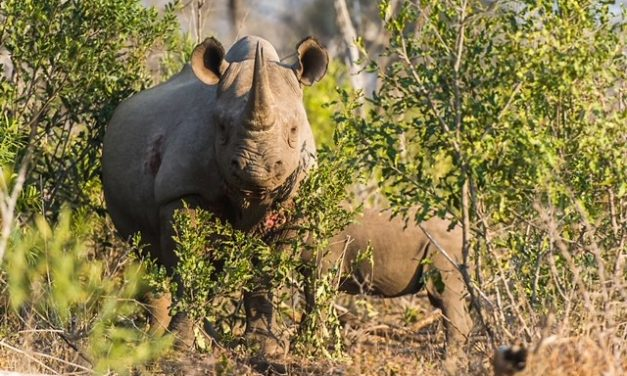 WINNERS ANNOUNCED FOR 10TH ANNUAL RHINO CONSERVATION AWARDS